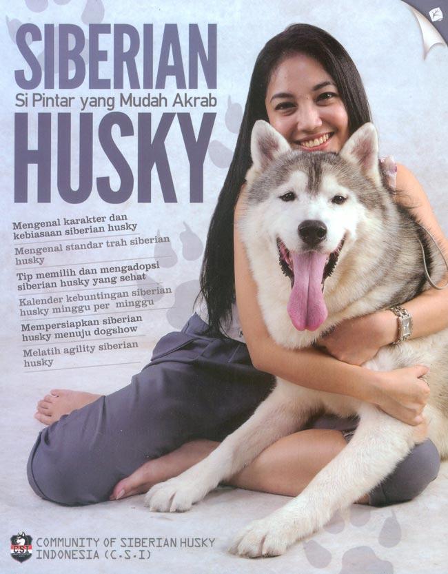 Siberian Husky Si Pintar yang Mudah Akrab