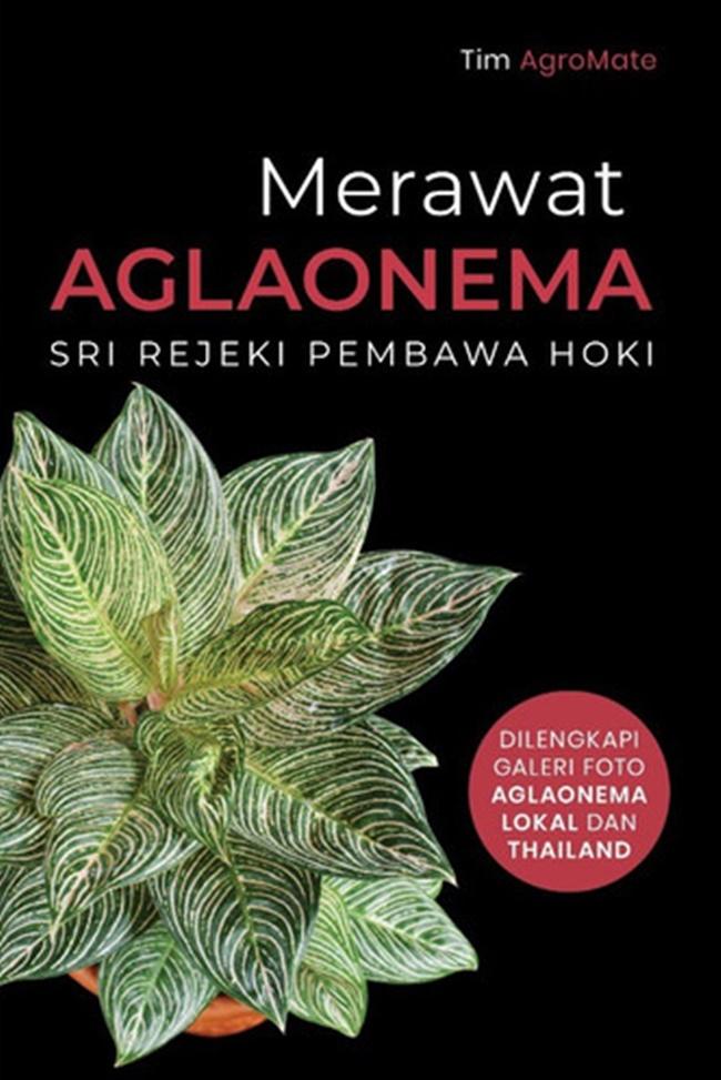 Merawat Aglaonema : Sri Rejeki Pembawa Hoki