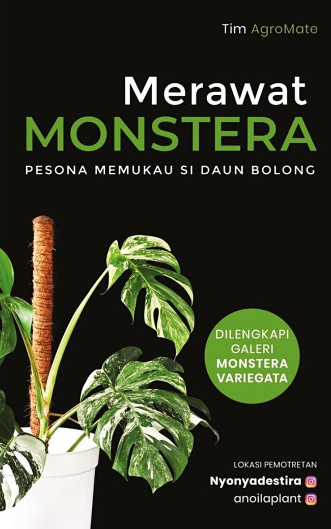 Merawat Monstera